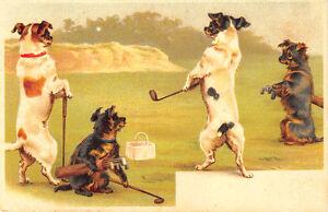 Rare Dogs Playing Golf Circa 1904 Postcard