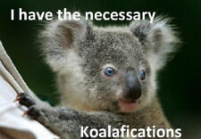 "Funny Koala Bear refrigerator magnet 3 1/2 X 4 3/4 """