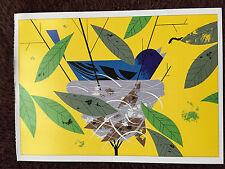 CHARLEY CHARLES HARPER Indigo Bunting  Art print  New Bird Nest BEAUTIFUL BLUE !