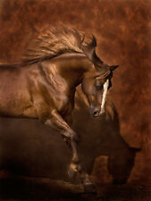 Horse Dancer by Robert Dawson Horse Giclee on Paper 18x24