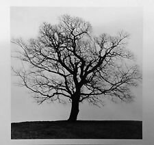 The gelatin silver print black and white photograph 245mm X 280mm
