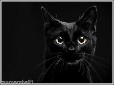 4 Autumn Black Cat Cats Kitten Kittens Note Stationery #5 Notecards/ Envelopes