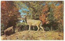 Big Buck on Hill Monarch of Nature'S Autumn Wonderland Deer Postcard Vintage