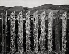 1935/63 Vintage FENCE MARIN County Mountain Landscape Photo By ANSEL ADAMS 11x14