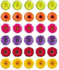 30 x Fiori Gerbera WAFER Commestibile Cupcake Topper Di Carta Fata Cake Topper