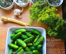 SEED TAPE MIX - F1 CUCUMBER  4m 120 seeds+ DILL 2m 540 seeds EASY SOW Gherkin