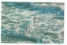 Snowy Egret Waterfowl White Water Bird Eastern Shore Virginia Va Postcard