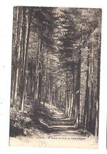 la route de corte en forêt d'aitone