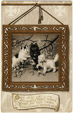 1901-1907 Our Old Cat had Kittens Three Names Be? Cats RARE Embossed DB Postcard