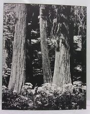 16X20 Original Print Photograph Matted Nature Trees Forest Interior B&W 1980's