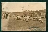 SARATOGA SPRINGS NY 1910 POSTCARD CONGRESS HALL SHEEP & PEOPLE
