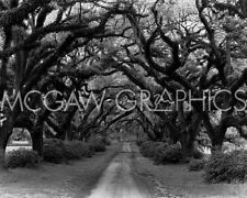 "NAGLER MONTE - PATH IN THE OAKS #2, LOUISIANA - ART PRINT POSTER 8"" X 10"" (395)"