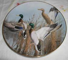 Hazy Ascent Plate Ducks Taking Flight David Maass