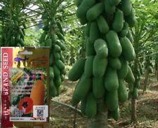 Papaya Thai Vegetable Plant Chia Tai 1g 5 seeds