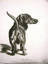 Diana Thorne 1935 DACHSHUND HOFFMAN Dog Print Matted