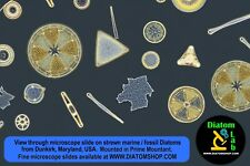 STREW MICROSCOPE SLIDE: DIATOMS from DUNKIRK, Maryland, marine fossil Miocene!