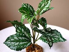 "Artificial Silk Aquarium Plant with Stone Base 7-8"" Small Pilea Friendship Bush"