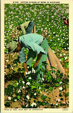 "C.1930'S JIM CROW ERA POSTCARD ""COTTON PICKERS AT WORK IN DIXIELAND"""