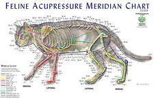 Feline Meridian Chart - Cat Acupressure Meridian Chart - Animalacupressure.com