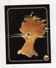 figurina card - AMICI DEL CUORE  - numero 117 UPUPA