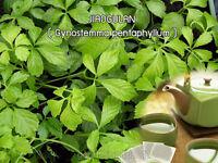 Jiaogulan Herbal Tea Bags 100% Gynostemma pentaphyllum anti aging/Oxidant Herb