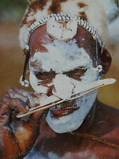 Tribal Asmat Bipane Septum Wood Seeds Nose Piercing Tattoo Papua Art Ethnography
