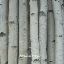4 Thick White Birch Poles 7'