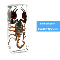 Scorpion Lucite in Clear Resin Embedding Real Insect Specimen Educational Black