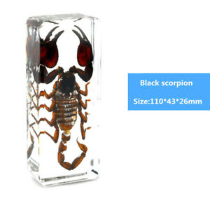 Scorpion Lucite in Clear Resin Embedding Black Real Insect Specimen Educational