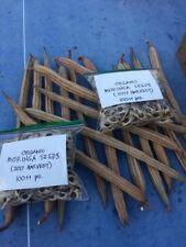 Malunggay Seeds