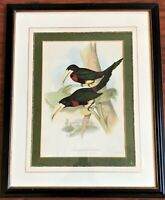 JOHN GOULD - FLAVIROSTIRIS TOUCANS PRINT LITHO 1852 - 1854 2nd Ed HAND COLORED