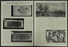 The Facts About Royal Bee Jelly 1958 2 Page Photo Article