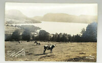 Postcard Real Photo Lake Willoughby, Vermont Richardson 523 Cows in Foreground