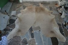 """BUTTER CREAM! Rug HAIR ON SKIN  Leather cowhide 1903 - 88"""" x 76"""""""