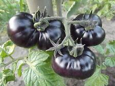 """schwarze TOMATE """"Black Fire""""  Fleisch-Tomate, rabenschwarz, rot-gelbe Streifen"""
