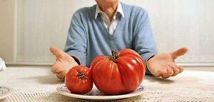 BEHEMOTH GIANT TOMATO * LARGEST FRUIT * HEAVY YIELDING PLANTS *