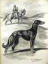 Megargee SLEEK SALUKI EGYPT 1953 Dog Art Print Matted