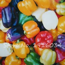 100 PCS Pepper seeds 6 Color mixed Yellow Purple Red Green Blue White Mix Sweet