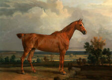 Hand painted Oil painting red horse standing in sunset landscape handpainted