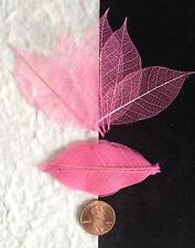25 Skeleton Leaves Pink Small leaf soapmaking cards candle 