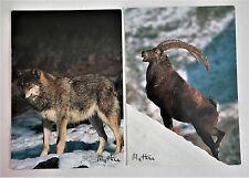 LOT de 3 Carte Postale animaux LOUP BOUQUETIN + DAUPHIN