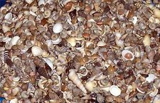 "1/2 Pound Tiny Mix Sea Shells Up to 1/2"" Decor Craft Reef"