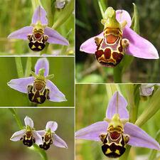50stk Garten selten Lächeln Gesicht Biene Orchidee Blume Samen Pflanzen Samen