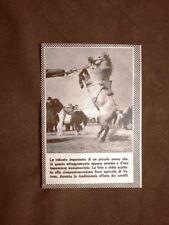 Verona nel 1957 59° Fiera agricola Durante la sfilata dei cavalli Veneto