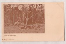 "VINTAGE POSTCARD QUEENSLAND TIMBERGETTERS, ""THE HODGKIN PRESS SERIES"" 1900s"