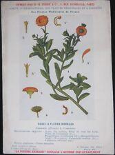 1920 French Medicinal Plant, Botanical Print - Marigold