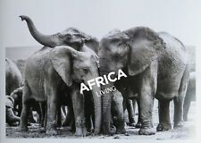 A3 Print - Elephant Group - Addo South Africa - By Sam Turley