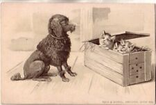 Pre-1906 Cats and dog unused embossed postcard