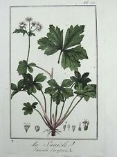 1801 R. Turpin - Wood Sanicle - LARGE PAPER EDITION original hand colour