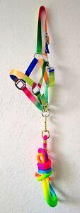 Gurthalfter + Führstrick, Rainbow, Neonfarben, Größe Shetland oder Pony   *NEU*
